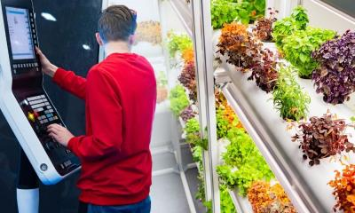 How To Eliminate and Prevent Mildew on Hydroponic Plants