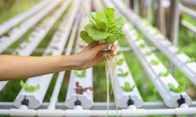 A Complete Guide To Transplanting From Soil To Hydroponics