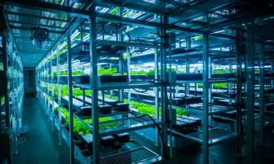 Common Signs Something's Wrong With Your Hydroponic Garden