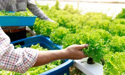 How To Start a Hydroponic Farming Business