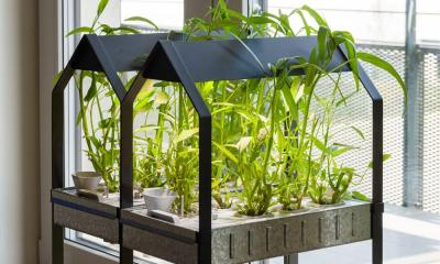 4 of the Key Reasons You Should Start a Hydroponic Garden