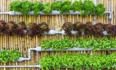 6 Tips for Starting Your First Hydroponic Garden