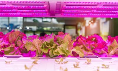 Hydroponic Lighting and Why It's So Important