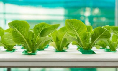 Reasons Your Hydroponics System May Be Leaking