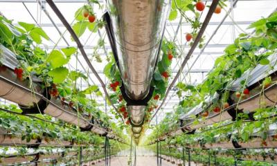 A Guide to Hydroponic Nutrients