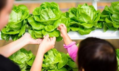 Questions to Ask Before You Buy Hydroponics Nutrients