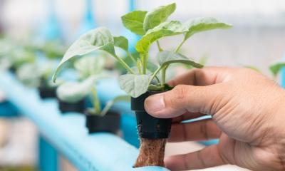 Hydroponics Irrigation Mistakes To Avoid