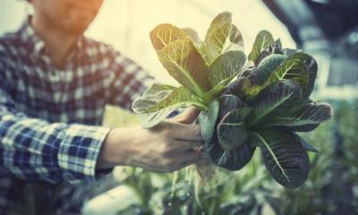 A Step-By-Step Guide To Cleaning Your Hydroponic System