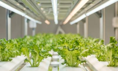 How To Stop Algae Growth in Your Hydroponic Garden