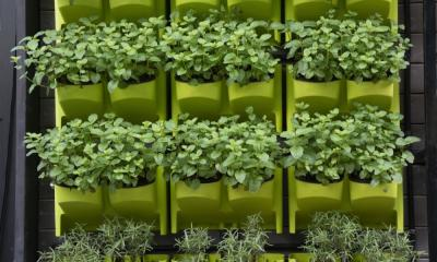How To Save Space When Growing Plants Hydroponically