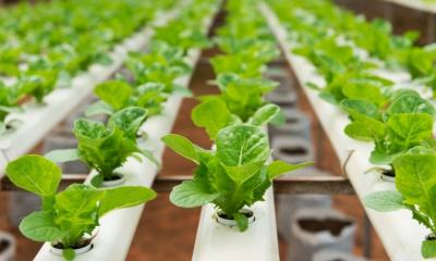 How To Choose the Best Hydroponic Tubing and Fittings