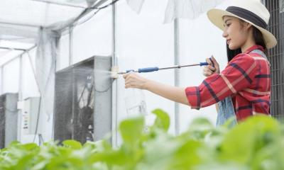 Reasons To Get a Battery-Operated Garden Sprayer