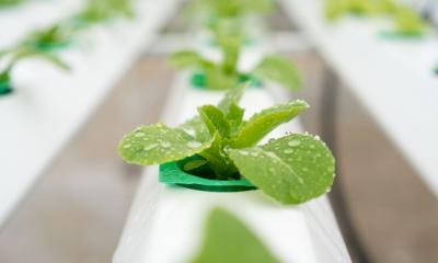 How to Maintain Your Hydroponic Reservoir