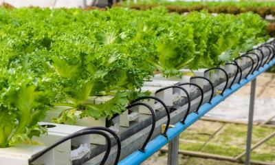 What Is Ebb and Flow Hydroponics and How Does It Work?