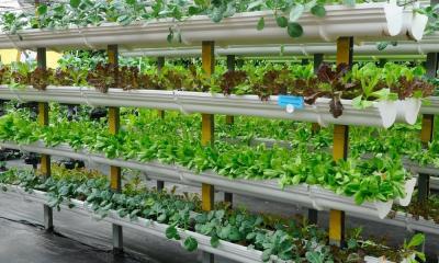 How To Make a Vertical Garden at Home
