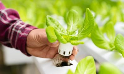 Which Vegetables Are Best Grown in Hydroponics?
