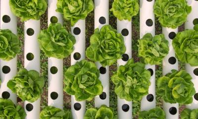 Regular vs. Hydroponic Nutrients: The Differences