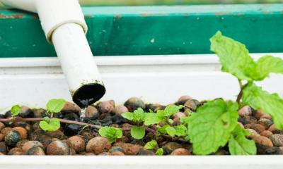 The Hydroponic Drip System Explained