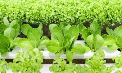 Tips To Succeed in Hydroponic Growing