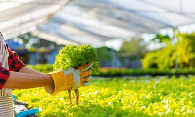 The Importance of pH in Hydroponic Systems