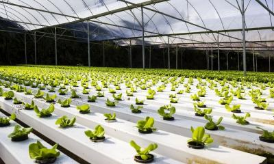 A Brief History of Hydroponics | How It All Began