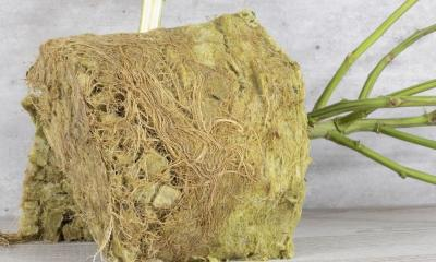 A Guide To Reusing Rockwool in Hydroponics
