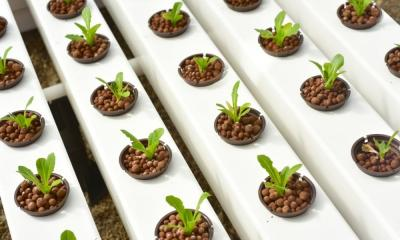 A Basic Guide to Seed Starting for Hydroponics