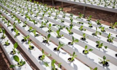 How to Choose the Right Hydroponic System